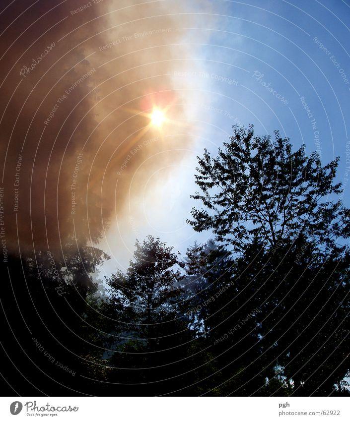 Sonne ist stärker Himmel Baum blau Brand Rauch Farbenspiel