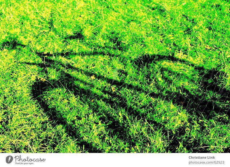 Fahrradschatten Wiese Gras grün Sommer Schatten Bewegung Natur Sonne Freude Außenaufnahme