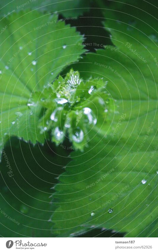 glas aufm blatt? Wasser grün Wiese Seil frisch Blütenkelch