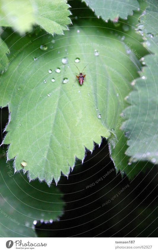 durst? Tier Insekt Erholung grün Wiese Sträucher Käfer Seil Natur