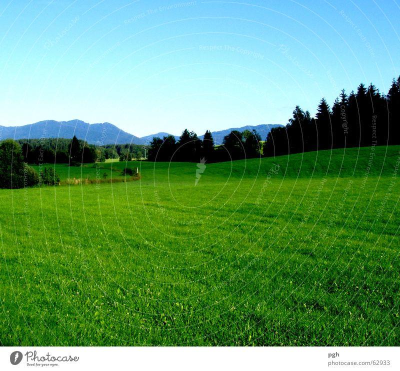 Saftige bayerische Wiese bei Iffeldorf Bayern Wald grün Landschaft Berge u. Gebirge Himmel grüne saftige wiese blau