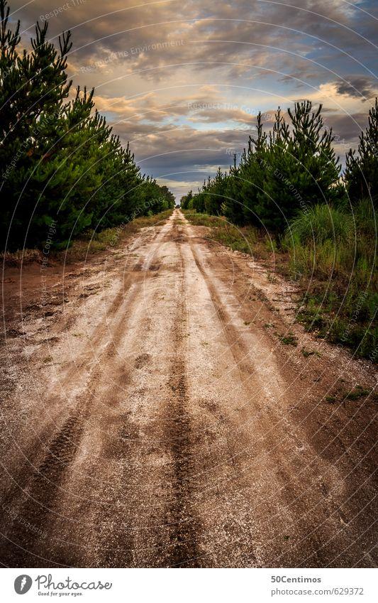 Am Wegesrand Natur Ferien & Urlaub & Reisen Ferne Wald Umwelt Straße Bewegung Freiheit Stimmung Tourismus wandern Beginn Armut Schönes Wetter Abenteuer Pause
