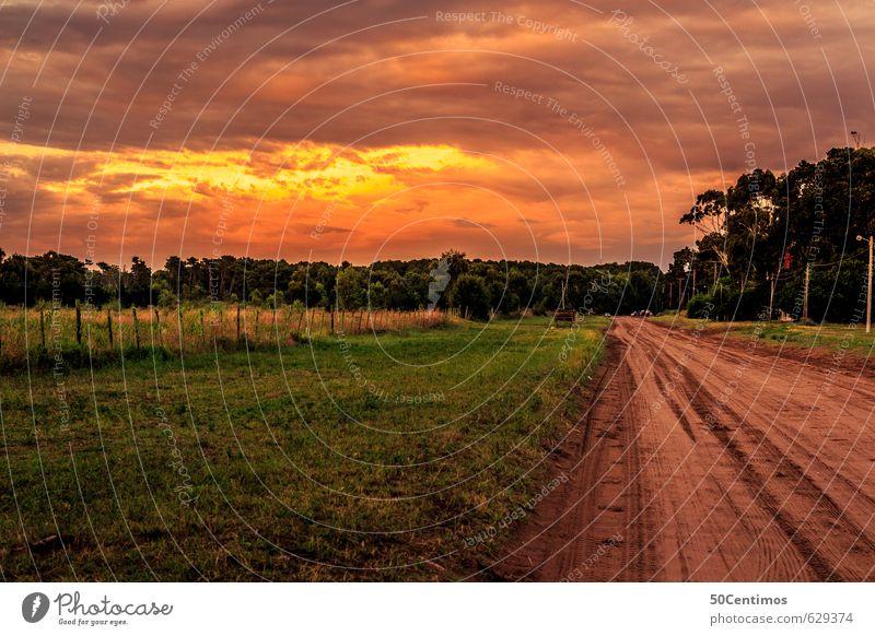 Strasse im Abendrot Natur Ferien & Urlaub & Reisen Landschaft ruhig Wolken Ferne Wald Wiese Wege & Pfade Zeit Stimmung Feld Klima Ausflug Schönes Wetter