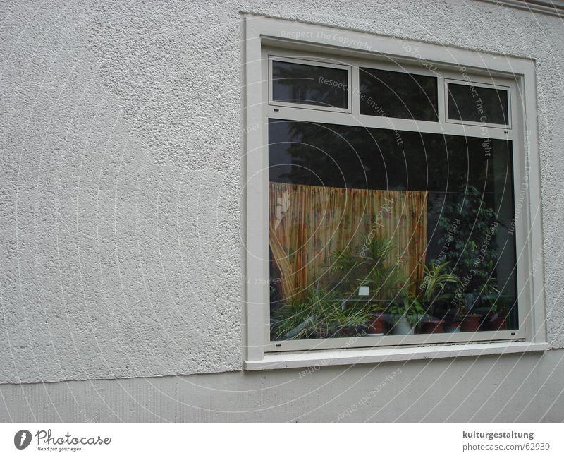 Berliner Fenster Haus Stadtteil Prenzlauer Berg Wohnung Einblick Gardine Zimmerpflanze Fensterscheibe Wand Beton Fensterrahmen Straße Pflanze Glas