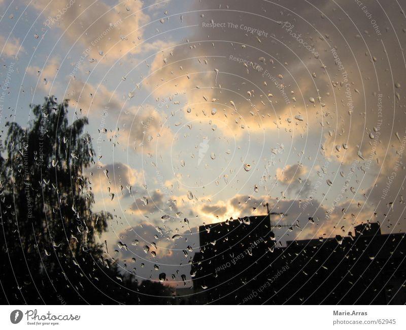 Abendstimmung Baum Haus Regen Abenddämmerung Blauer Himmel schlechtes Wetter