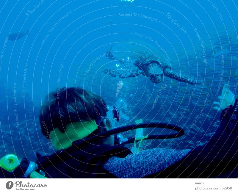.underwater-meeting. Wasser Sport tauchen Schildkröte Riff
