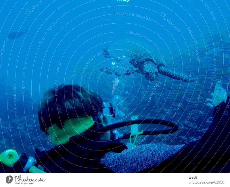 .underwater-meeting. tauchen Schildkröte Riff Wasser maledives Sport Unterwasseraufnahme