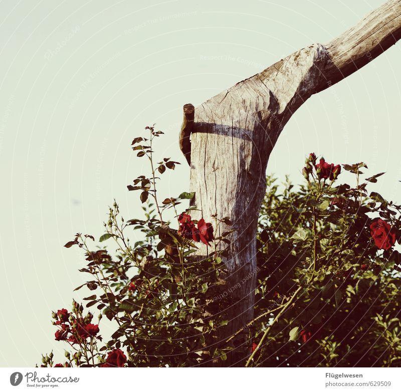 Gartenträume Ferien & Urlaub & Reisen Umwelt Natur Landschaft Pflanze Tier Sommer Klima Klimawandel Wetter Blume Sträucher Rose Tulpe Blatt Blüte Grünpflanze