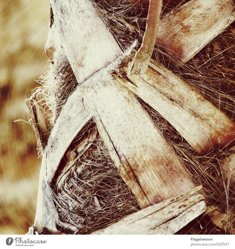 Palme Ferien & Urlaub & Reisen Tourismus Ausflug Umwelt Natur Landschaft Pflanze Tier Sommer Klima Klimawandel Baum exotisch dehydrieren Wachstum Palmenwedel