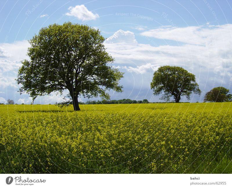 Der Norden ist schön ... Himmel Natur blau grün Baum Sommer Wolken gelb Herbst Landschaft Raps Rapsfeld Blühende Landschaften