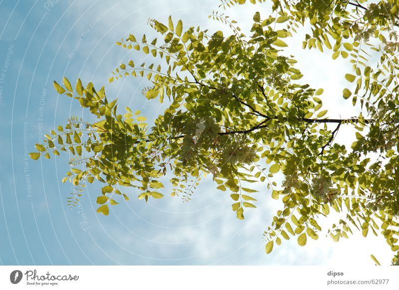 Nach dem Wolkenbruch ... Himmel weiß Baum blau Sommer Blatt gelb Blüte Frühling Essig Lichtstimmung