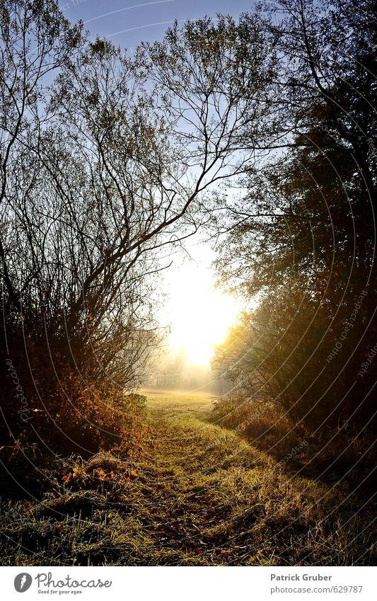 Der Weg ins Licht Natur Landschaft Schönes Wetter Pflanze Baum Gras Sträucher Feld Wald Dorf Gefühle Stimmung Farbfoto Außenaufnahme Menschenleer Morgen