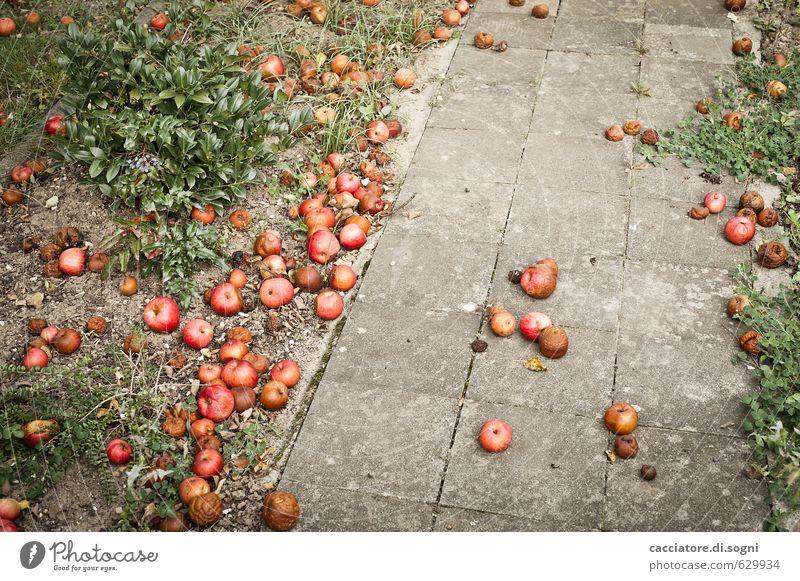 Der Weg in den Herbst Apfel Umwelt Schönes Wetter Garten Wege & Pfade kaputt natürlich trist grau grün rot Enttäuschung Erschöpfung verschwenden bizarr