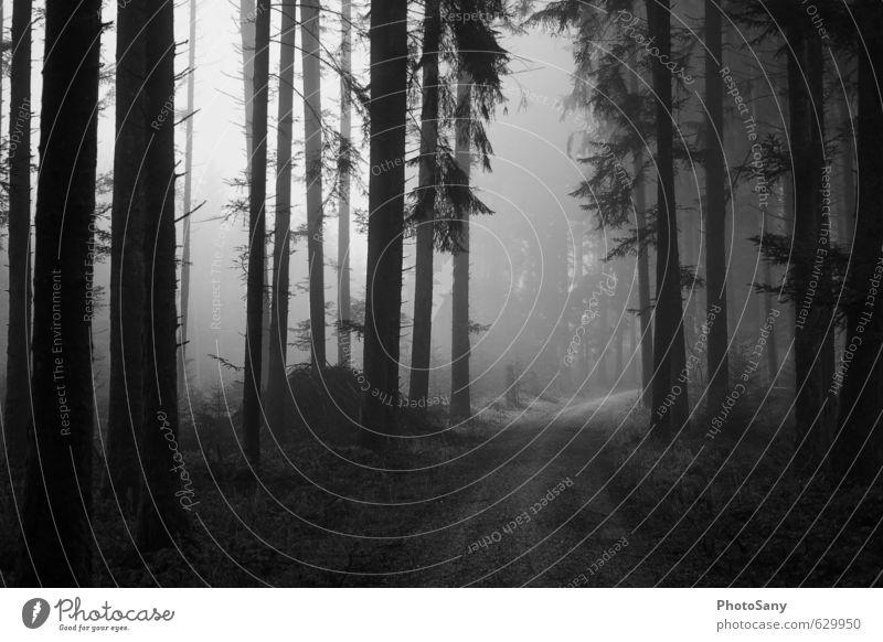 Weg ins nichts Natur Herbst Wetter Nebel Baum Wald grau schwarz Stimmung Fußweg dunkel Schwarzweißfoto Außenaufnahme Menschenleer Tag Schatten Kontrast