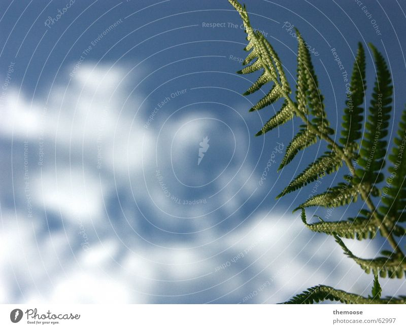 aspidium filix-mas Natur schön Himmel Pflanze oben Wachstum unten friedlich Echte Farne