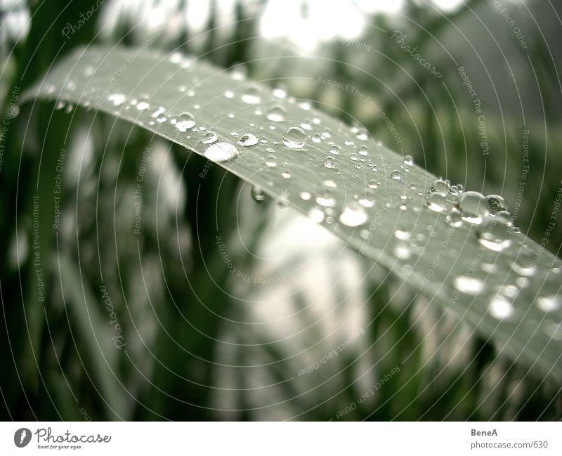 Tropfen Blatt See Wassertropfen nass Pflanze Teich Regen Herbst nah grün grau Sauberkeit rein gewaschen Trauer trist Licht Hoffnung Reifezeit Makroaufnahme