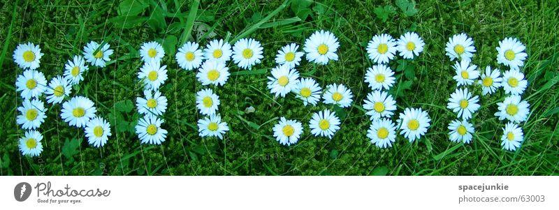Kitsch Sommer Frühling Rasen Schriftzeichen Buchstaben Gänseblümchen Blume
