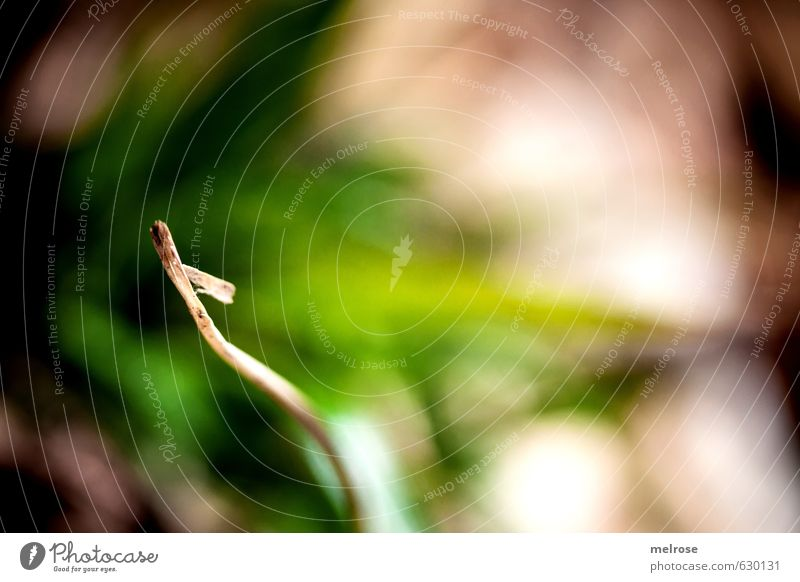 Halm wandern Umwelt Natur Tier Sonnenlicht Winter Gras Moos Wildpflanze grashalm Stengel Feld Wald atmen Blühend trocken braun grün weiß Zufriedenheit