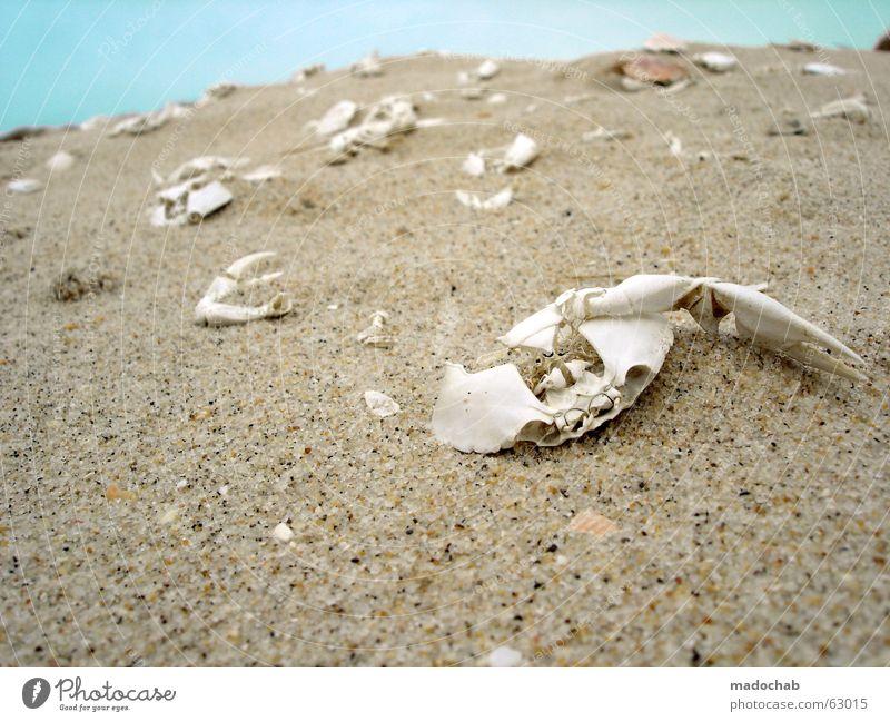 STRANDLEBEN | tod leben life death vergänglichkeit tauer schmerz Natur Ferien & Urlaub & Reisen alt blau Meer ruhig Tier Strand Leben Traurigkeit Küste Tod Zeit