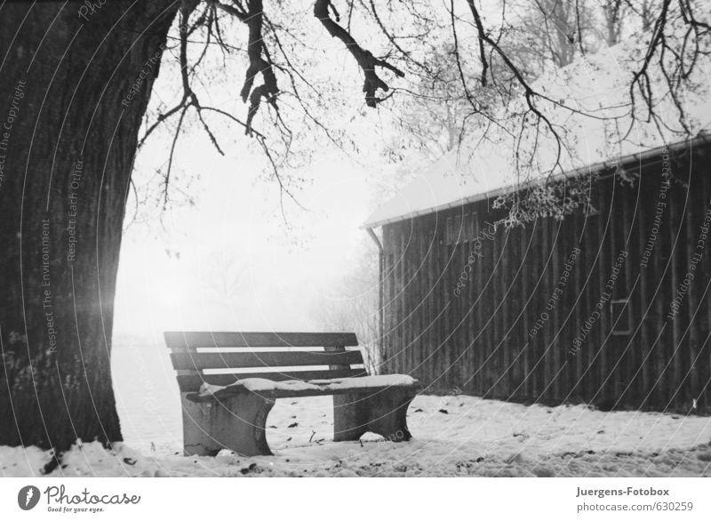 Sitzplatz Natur Winter Schnee Baum Feld Menschenleer Hütte Beton Holz frieren wandern warten authentisch hell kalt schwarz weiß demütig Traurigkeit Trauer