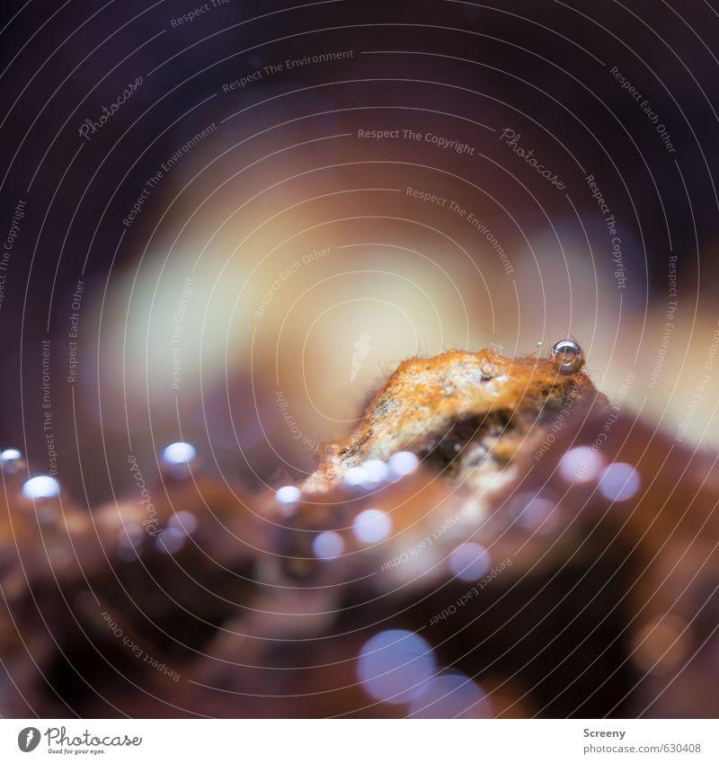 Blubb... Wasser Felsen braun Unterwasseraufnahme Aquarium Luft Luftblase Unschärfe glänzend Oberflächenspannung Farbfoto Makroaufnahme Menschenleer