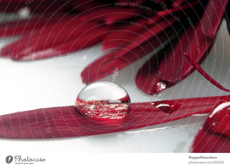 Wassatrobben Wasser rot Glas Spiegel