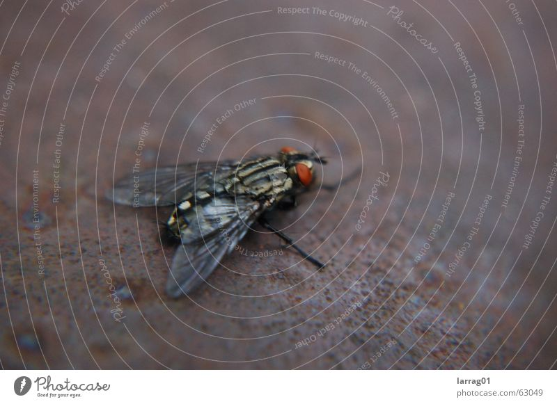 bsss fliegen Insekt nervig Rüssel Chitin Eisenbahn Ferien & Urlaub & Reisen kalt klein Facettenauge Rost schlagen durchsichtig Ekel Angst Außenaufnahme Fliege