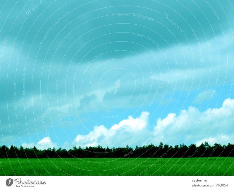 Heaven feat. Earth Sommer dunkel Feld Landwirtschaft Wolken schlechtes Wetter Wald Hoffnung Erwartung unheimlich Stimmung grün Kornfeld Wachstum gedeihen Wiese