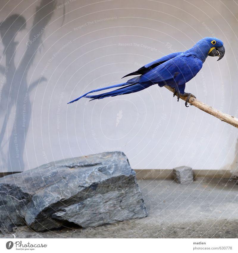 kobaltblau weiß Tier grau Vogel sitzen