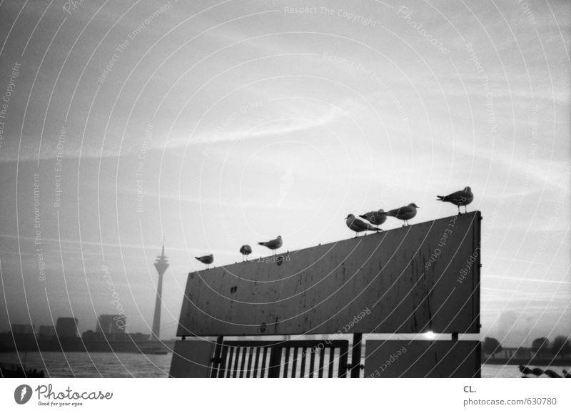am rhein Himmel Ferien & Urlaub & Reisen Stadt ruhig Ferne Umwelt Freiheit Vogel Horizont Freizeit & Hobby Idylle Schilder & Markierungen Aussicht Ausflug