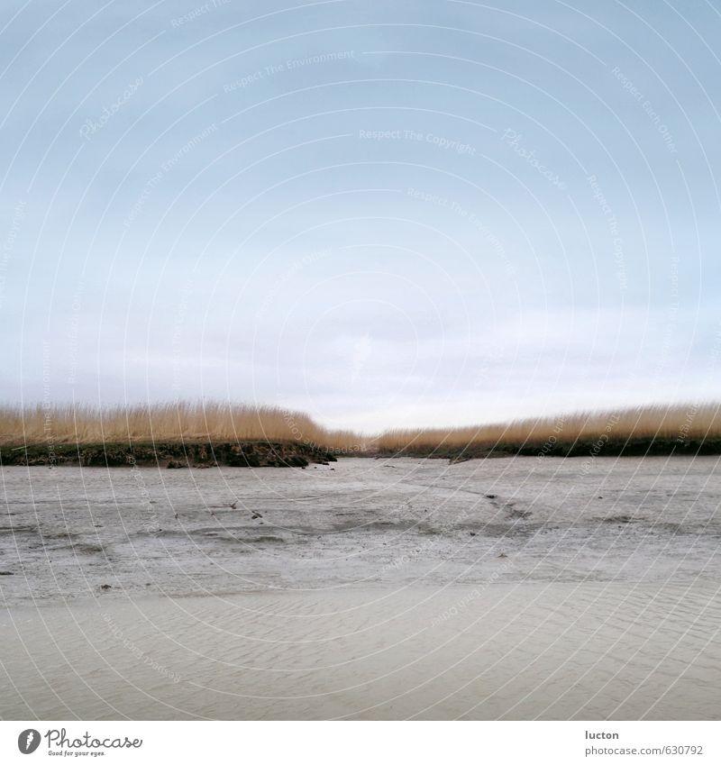 Watt und Schilf Umwelt Natur Landschaft Sand Himmel Herbst Winter Pflanze Küste Nordsee Wattenmeer Salzwiese Dollart entdecken blau braun grau