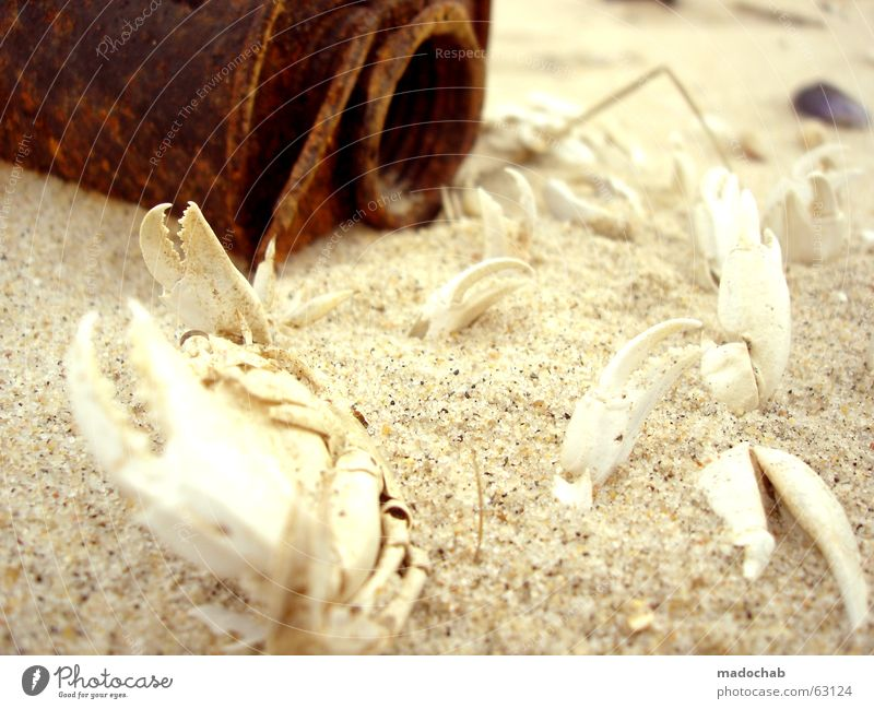 NEGATIV POSITIV | leben tod strand krebse skelett knochen Natur alt Meer rot Strand Ernährung Tier Leben dunkel Tod Wege & Pfade Sand hell Küste Angst