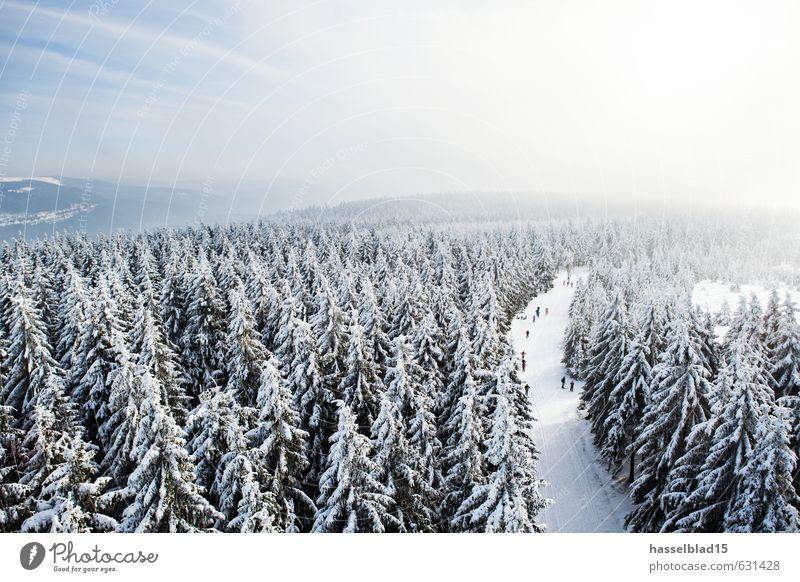 Rundflug Ferien & Urlaub & Reisen Erholung ruhig Freude Winter kalt Wald Leben Schnee Sport Glück Gesundheit Menschengruppe Zufriedenheit Lifestyle Tourismus