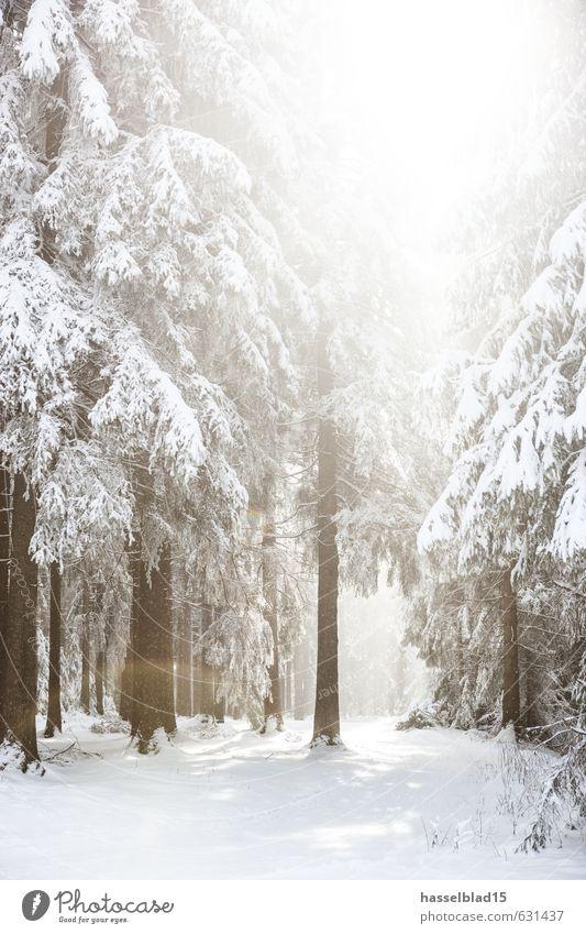 Winter-Wonder Ferien & Urlaub & Reisen Erholung ruhig Freude Wald kalt Berge u. Gebirge Leben Schnee Gesundheit Glück Zufriedenheit Tourismus wandern Ausflug
