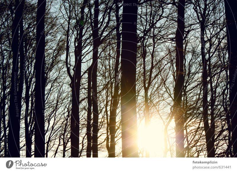 winterlichtbäume Natur Baum ruhig Winter Ferne Wald Traurigkeit Herbst Freiheit oben Stimmung Perspektive Vergänglichkeit Wandel & Veränderung Hoffnung