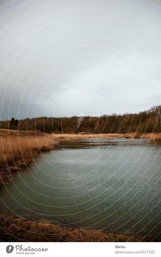 Geheimsee Umwelt Natur Landschaft Wasser Himmel Wolken schlechtes Wetter Seeufer Teich dunkel natürlich trist grau Einsamkeit ruhig Menschenleer trüb Farbfoto