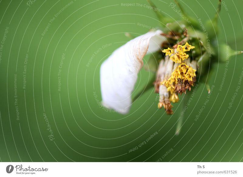 Verblühen Natur grün Pflanze Umwelt natürlich authentisch ästhetisch Verfall verblüht