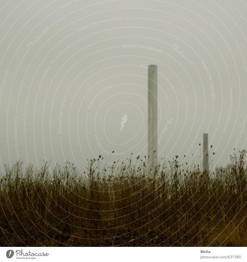 Montags Industrie Umwelt Natur Landschaft schlechtes Wetter Pflanze Gras Wiese Schornstein verblüht dehydrieren trist grau Umweltverschmutzung Vergänglichkeit