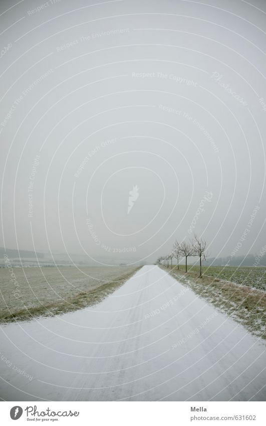 Immer der Nase nach Umwelt Natur Landschaft Winter Schnee Baum Wege & Pfade Wegkreuzung kalt lang natürlich trist grau trüb gerade geradeaus Kurve Farbfoto