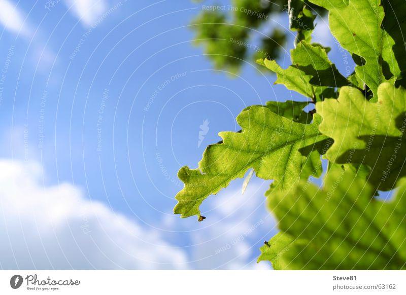Sun Above #3 Natur Himmel weiß Baum Sonne grün blau Sommer Blatt Wolken Erholung Luft Perspektive Ast atmen Schönes Wetter