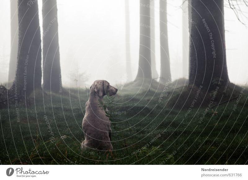 Aufpassen Hund Baum Einsamkeit Erholung ruhig Tier Wald Leben Freiheit Stimmung Wetter elegant Nebel sitzen ästhetisch Wassertropfen