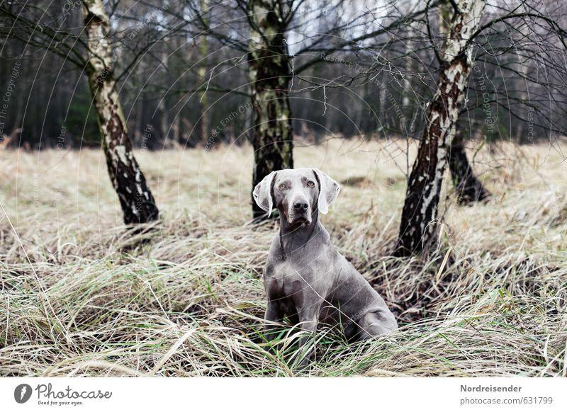Tarnung Freizeit & Hobby Jagd Natur Landschaft Baum Gras Wald Tier Hund Neugier Mut Tierliebe achtsam Wachsamkeit Verlässlichkeit Stolz elegant Erwartung