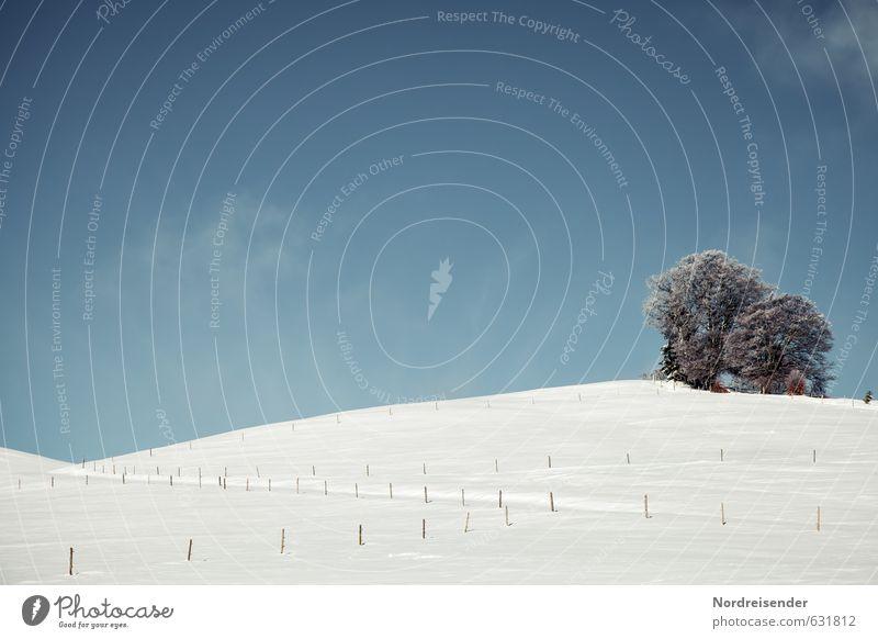 Es war einmal im Schwarzwald.... Natur blau weiß Pflanze Baum Erholung Landschaft Winter Schnee Wege & Pfade Eis Idylle Tourismus Schönes Wetter Fröhlichkeit