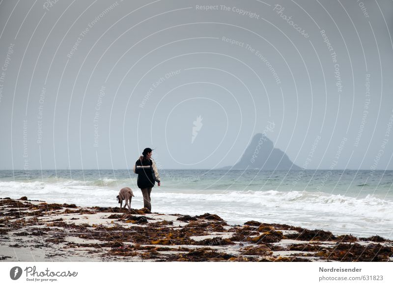 Vesterålen Hund Mensch Frau Ferien & Urlaub & Reisen Meer Erholung ruhig Ferne Strand Erwachsene Küste Freiheit Wetter Regen Wellen Wind