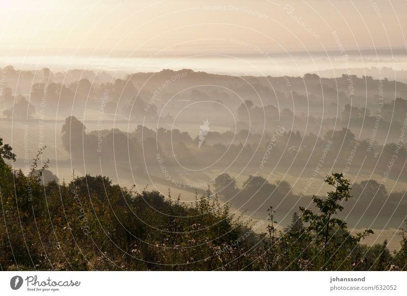 Morgendämmerung Natur schön Pflanze Baum Einsamkeit Landschaft ruhig Ferne Wald Wärme Herbst Freiheit außergewöhnlich braun Horizont Stimmung