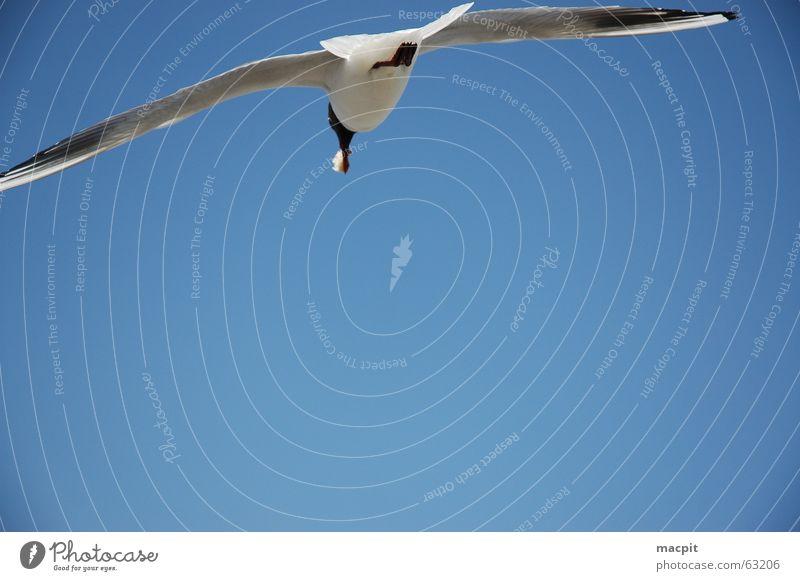 Jonathan livingstone seagull Himmel blau See Vogel fliegen frei Luftverkehr Flügel Fressen