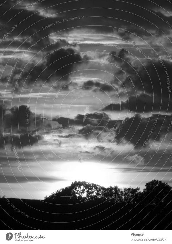 Event Horizon Sonnenuntergang Wolken Stratokumulus Dämmerung schwarz weiß grau Monochrom Baum Sträucher Horizont Einsamkeit Menschenleer Licht dunkel Nacht