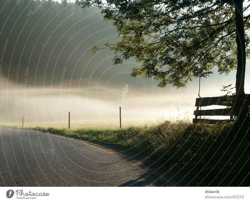 SommerMorgen Baum Wald Fichte Nebel Bodennebel Stimmung Tau Wiese mit zaun mühlviertel Weide Wege & Pfade