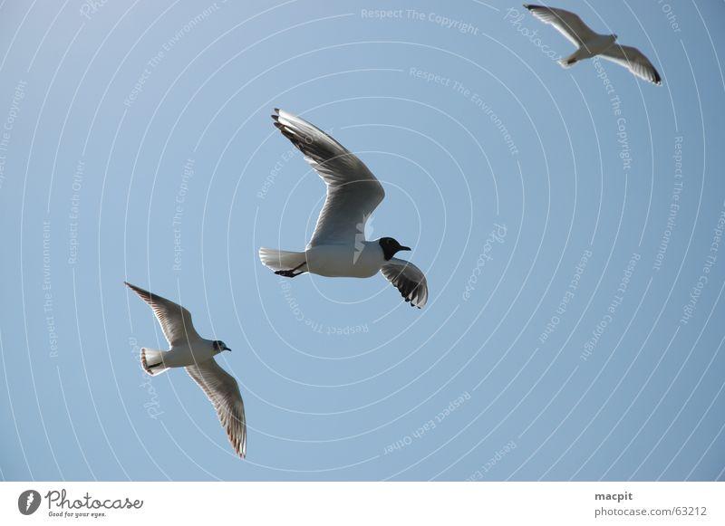 Jonathan livingstone seagulls Himmel blau See Vogel fliegen frei Luftverkehr Flügel