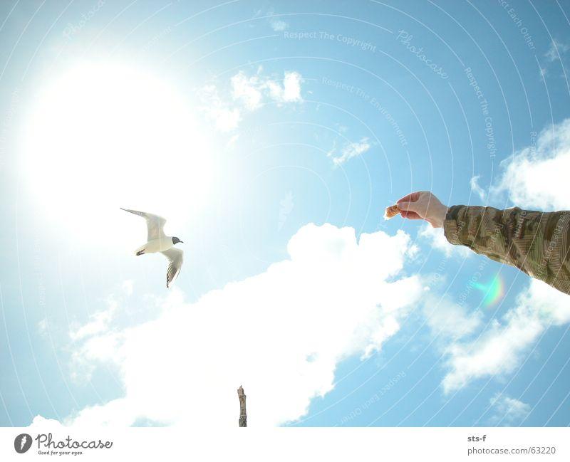 Die Möwe Himmel weiß Sonne blau Sommer Strand Wolken Sand Vogel füttern Langeoog